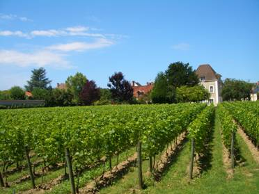 The vineyards at Jacquesson